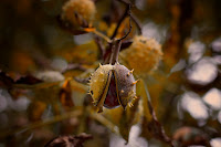 http://fineartfotografie.blogspot.de/2014/11/fotografische-herbstimpressionen-2014.html