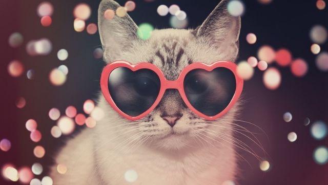 تطبيق يترجم مواء القطط إلى كلمات بشرية
