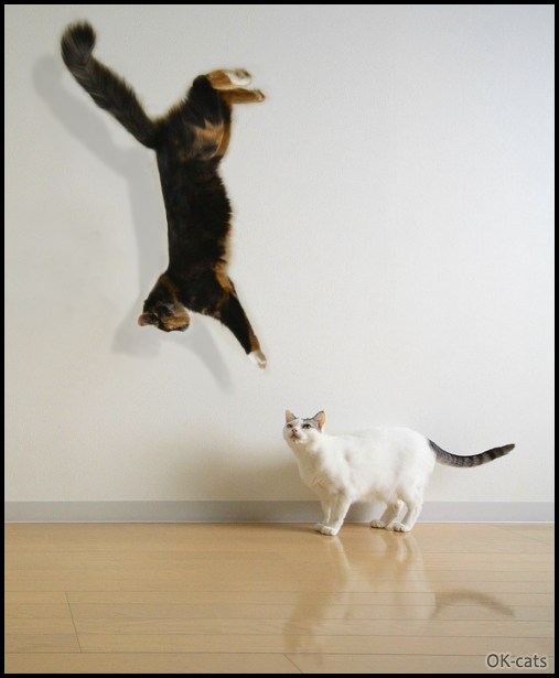 "Photoshopped Cat picture •  Paranormal CATivity  Cat floatind in the air with upside down head. ""What're you doing Bro?"""