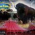 Acrobazie ed emozioni con gli show del Circo di Vienna