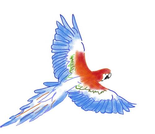 How To Draw A Parrot Easy Step By Step How To Draw A Parrot Flying With Color Beautiful Parrot Drawing
