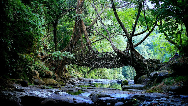 places to visit in shillong cherrapunji