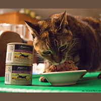 Ziwi Peak Daily Cat Cuisine Cat Food Review