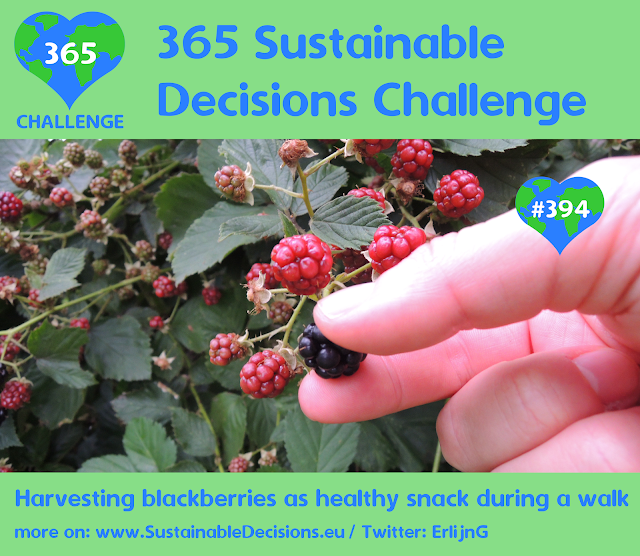 #394 - Harvesting blackberries as healthy snack during a walk, sustainable living, sustainability, climate action