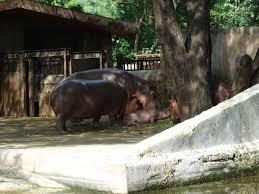 delhi zoo, national zoological park, new delhi zoo, delhi chdiyaghar