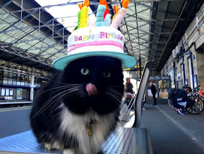 Celebrity black and white cat, Felix, who's home is Huddersfield railway station, has recently reached sixty thousand Facebook fans and has a book written about it