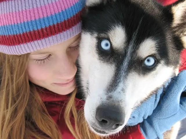 9 raisons pour lesquelles vous devriez câliner votre Husky plus souvent - Husky Câlin
