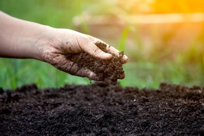 ખેતીમાં વધારે ઉત્પાદન મેળવવાના ઉપાયો