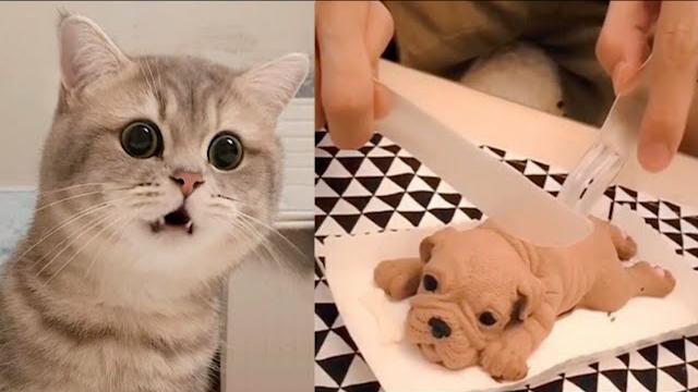 Funny videos animal