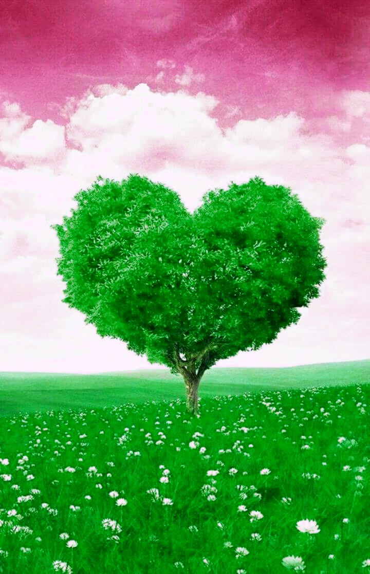 Tree Of Love Nature Hd Photos
