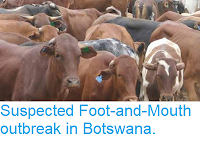 https://sciencythoughts.blogspot.com/2018/06/suspected-foot-and-mouth-outbreak-in.html