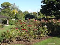 Rose garden view - Mona Vale Garden, Christchurch, New Zealand