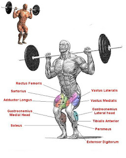 Top 5 Exercises For Building Legs, Front Squats