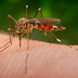 Protect Yourself from the Zika Virus