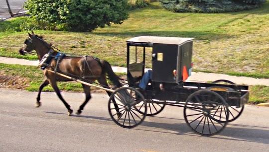 Amish cargo Buggy