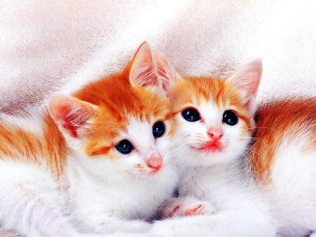 Very Cute Cat Wallpaper Hd | Cat Wallpaper