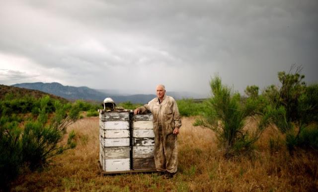 Σα να στέλνουμε τις μέλισσες σε πόλεμο: Όλη η αλήθεια για το γάλα αμυγδάλου