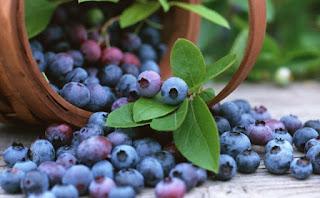 Kandungan Gizi Dan Manfaat Buah Blueberry