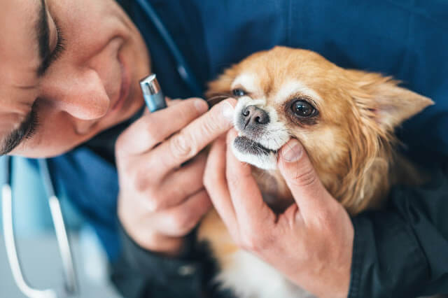 How Much Does Dog Teeth Cleaning Cost?