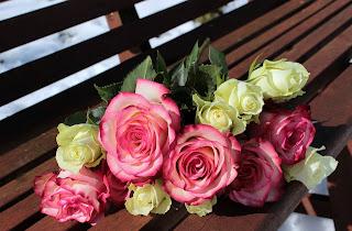 rose day of valentine week in hindi