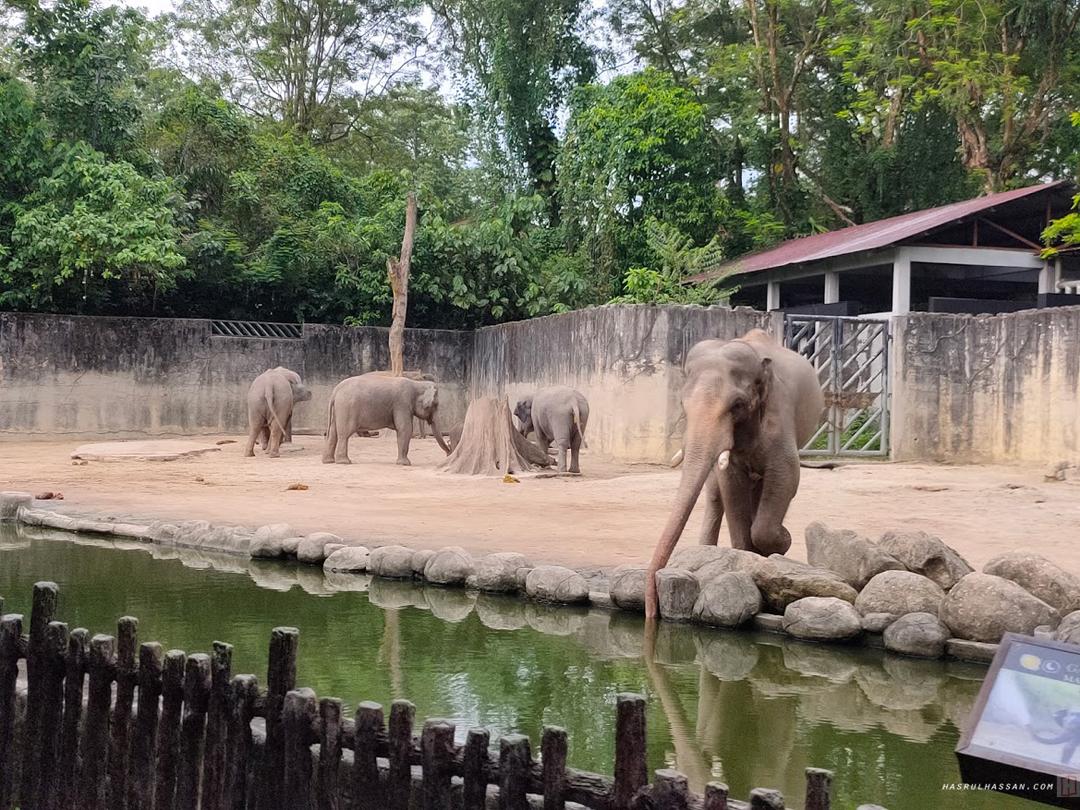Gajah Asia Zoo Taiping