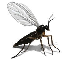 Tagnok Insect