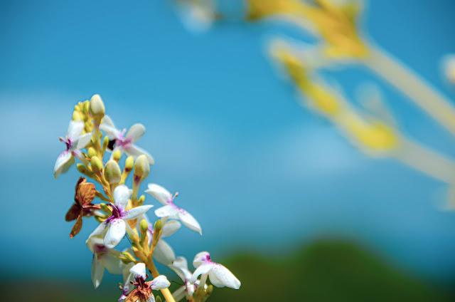 Wzgórza Czekoladowe na Filipinach - Przyroda