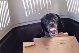 Aggressive Dog Gives In and Lets Rescuer Touch Him For The First Time