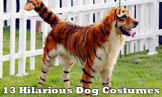 Perro tigre.