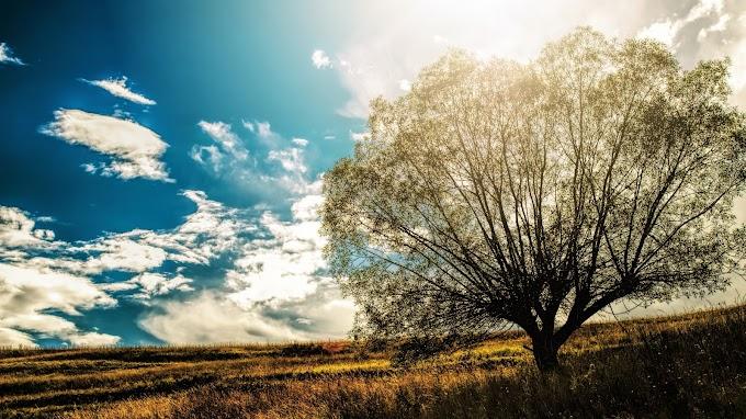 Взаимодействие христианства и культуры: сравнительный анализ понятий