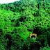 La agricultura migratoria destruye Bosque Nublado de Carpish