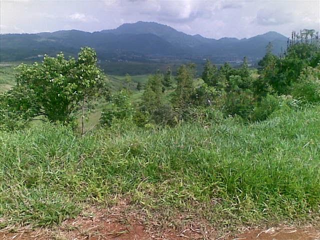 Foto(5377) Jual Tanah Murah Luas 130 Ha, Harga 50.000 Di Puncak Jual tanah di cipanas jual tanah di puncak