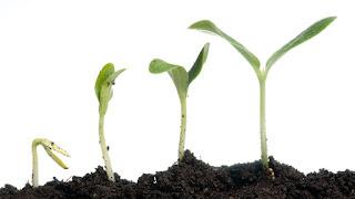 Perkembangan Dan Pertumbuhan Pada Makhluk Hidup