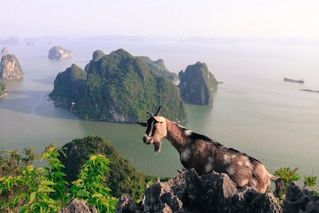 Núi bài thơ Vịnh Hạ Long