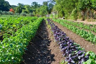 La agricultura orgánica no es vegana