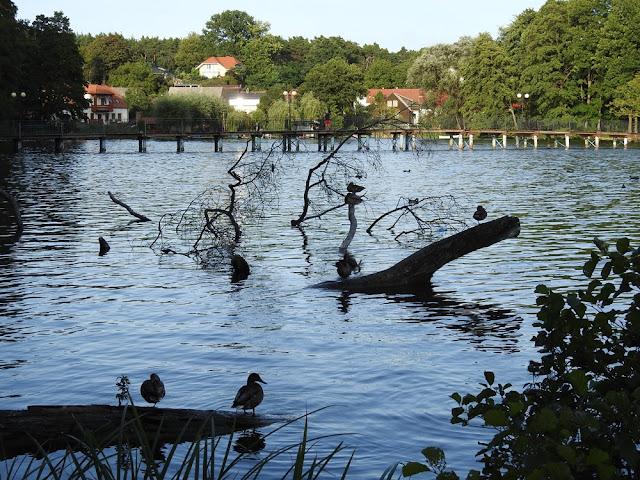 Lubniewice jest bardzo atrakcyjną miejscowością położoną w województwie lubuskim