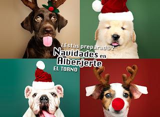 Programación y ofertas Navidades 2018-2019 en Alberjerte (Valle del Jerte)