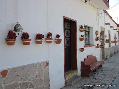 Calles pintadas y coloridas atraen turismo en Santa Cruz de las Flores