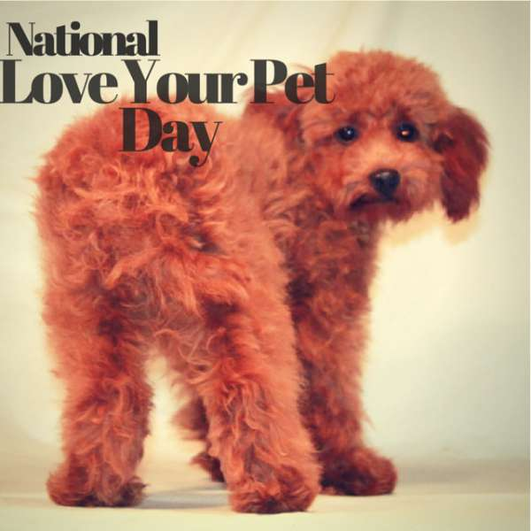 National Love Your Pet Day Wishes Pics