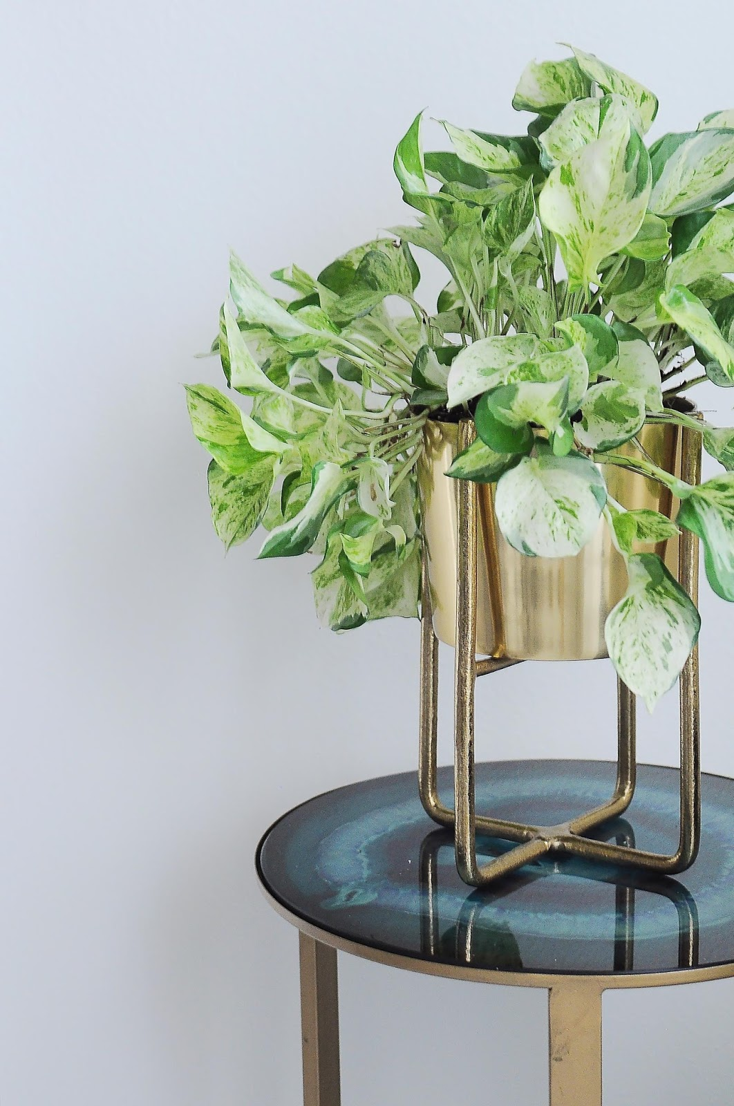 Indoor plant in a brass gold planter with stand.