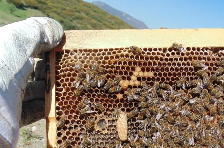 Βορίδης: Στήριξη με 1,8 εκατ. ευρώ στη μελισσοκομία στα μικρά νησιά