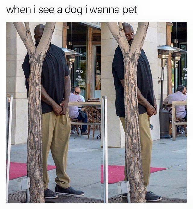 When I see a dog I wanna pet.