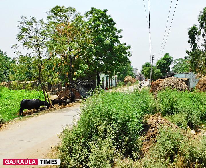 sadallapur-village-pictures