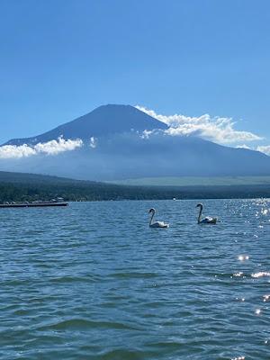 山中湖 湖水上の白鳥