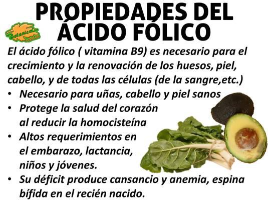 Blog de plantas beneficios del cido f lico - Alimentos buenos en el embarazo ...