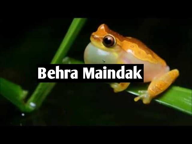 Behra Maindak - بہرا مینڈک - سبق آموز کہانی
