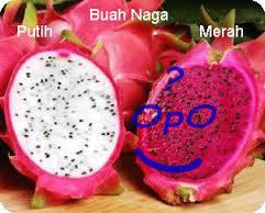 Opo - Manfaat buah naga untuk kesehatan