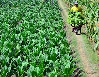 Pengertian Pasar Oligopsoni, Ciri, Kelebihan, Kekurangan, dan Contohnya