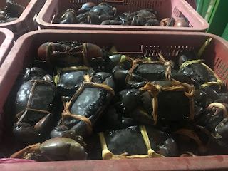 Supplier Kepiting Bakau Murah 081282172354