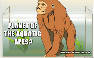 While some evolutionists admit that they have no actual evidence for their beliefs, they maintain atheistic naturalism. In this case, the weird idea of the aquatic ape.